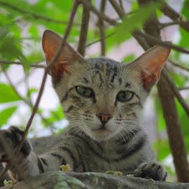 Cute Kitten  by Abhijeet  Yadav - Animals - Cats Kittens ( kitten, cat, cute cat, young, mammal )