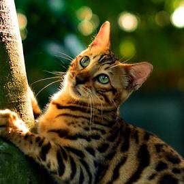 by Neni Wijaya - Animals - Cats Playing ( cat, ciketing, mygarden, animal )