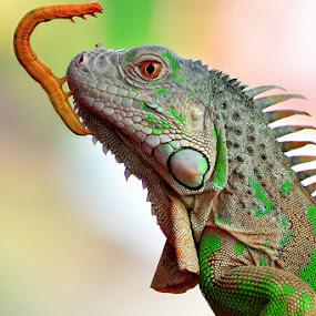 freinds#3 by Sandi Nopri yanto - Animals Reptiles