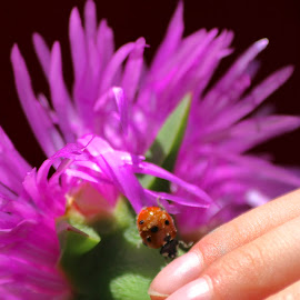 Flower and Lady Bug by Robin Thurner - People Body Parts ( photograph, nature up close, ladybug, flowers, insects )