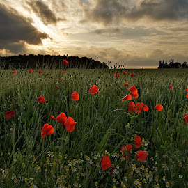 by Helsen Eddy - Landscapes Prairies, Meadows & Fields