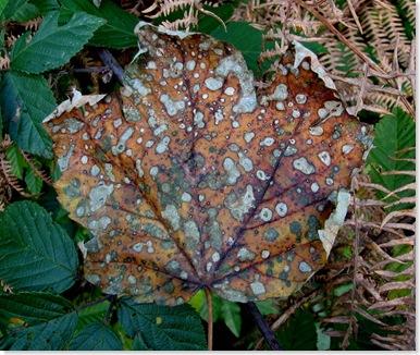 20081027 Wbx & Brede High Wood 032