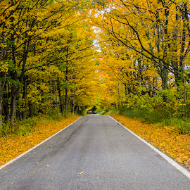 Autumn a beautiful season by Nature by Ajay Chandran - Transportation Roads ( nature, yellows, autumn, trees, road, yellow, autumn colors )
