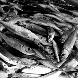 Fish Market by Mikki W - Food & Drink Meats & Cheeses ( market, black and white, death, fish, eyes )