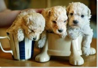 Image Result For Dog Training Ventura