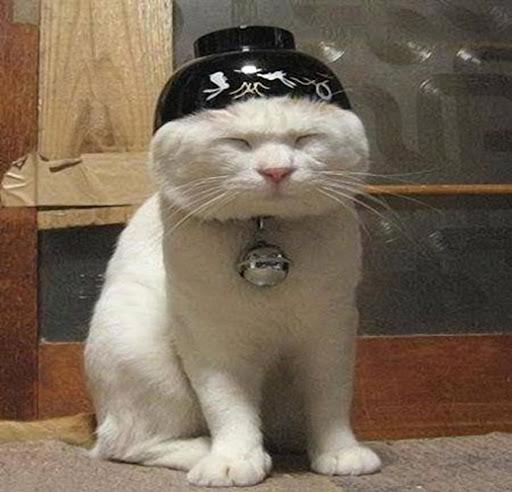 Beijing Cat