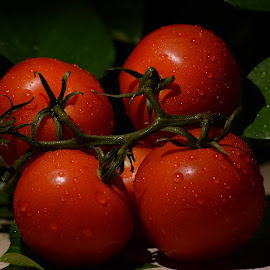 Tomatoes by Sathyanarayanan Shanmugam - Food & Drink Fruits & Vegetables ( tomatoes )