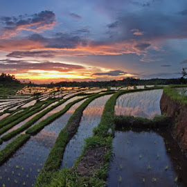 Jatiluwih Rice Fields by Arya Satriawan - Landscapes Prairies, Meadows & Fields ( water, reflection, sky, rice, color, national geographic, sunrise, landscape, fields )