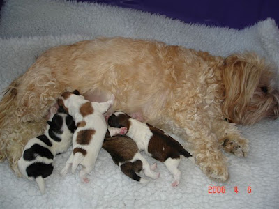 Libby and her litter
