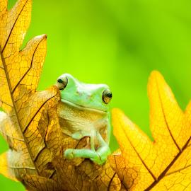 Shy by Sofyan Ian - Animals Amphibians