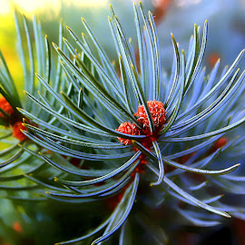 by Eni Zanic - Nature Up Close Other Natural Objects