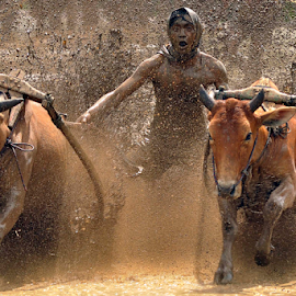 cow race by Liyandra Roestam - News & Events Sports