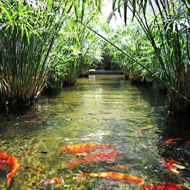 aquatic pool by Venkata Krishnan - Nature Up Close Water ( #fish #water #pond #garden #villa )
