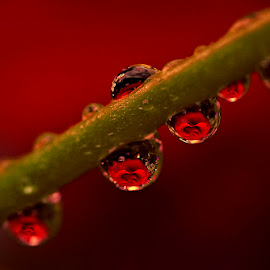 by Marina Đanić - Nature Up Close Natural Waterdrops