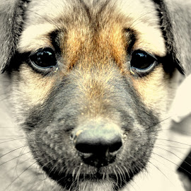 Pup. by Kartik Sharma - Animals - Dogs Puppies ( pups )