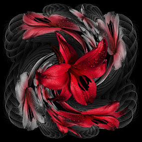 Red Lilly's by Carmen Velcic - Digital Art Things ( flowers lilys calla lily red abstract )