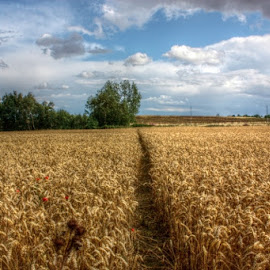 by Chrissie Barrow - Landscapes Prairies, Meadows & Fields ( field, wheat, clouds, sky, hdr, perspective, landscape )