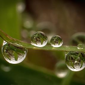 natural dews  dews in the dews by Kawan Santoso - Nature Up Close Natural Waterdrops