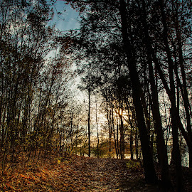 by Michael Last - Landscapes Forests