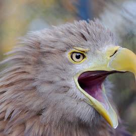 by Ivan Marjanovic - Animals Birds