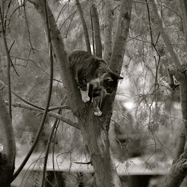 Playful cat in the trees by Adria Bannocks - Animals - Cats Playing ( playing, cat, waters edge, portrait )
