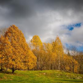 Autumn by John Einar Sandvand - Landscapes Forests