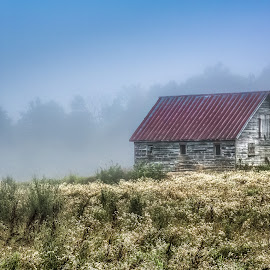 Amongst the Wildflowers by Trevor Pottelberg - Buildings & Architecture Other Exteriors ( wildflowers, canada, scenics, art, ontario, scenic, morning, board, landscape, rustic, photography, field, pottelberg, barn, t.pottelberg, fog, summer, sunrise, eastern, fine, mist, trevor )