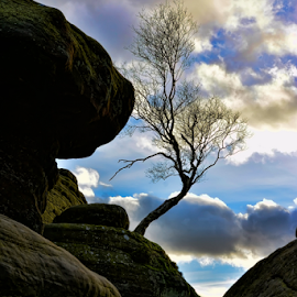 Brmham Rocks by Paul Telford - Nature Up Close Rock & Stone ( paul, sky, tree, brimham, rock formation, rocks, telford, photography )