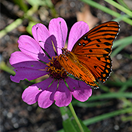 The shadows know by Raymond Earl Eckert - Animals Other ( butterfly; flower; garden; sunlight; plant; colors,  )