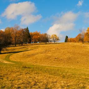 Autumn in Carpathian Mountains by Ioan-Dan Petringel - Landscapes Mountains & Hills ( carpathian mountains, colour, poiana brasov, autumn, romania, landscape )