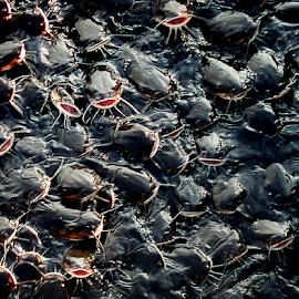 catfish in florida by Lennie Locken - Animals Fish
