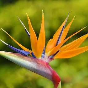 #nature by Chobi Wala - Flowers Single Flower ( , color, colors, landscape, portrait, object, filter forge, purple, yellow, selective color, pwc )