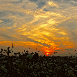 by Ann Bjerring Ravn Weis - Landscapes Sunsets & Sunrises