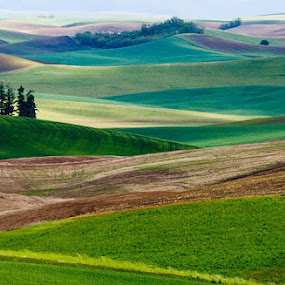 Rolling hills of the Palouse, Wa. by Gale Perry - Landscapes Prairies, Meadows & Fields ( , renewal, green, trees, forests, nature, natural, scenic, relaxing, meditation, the mood factory, mood, emotions, jade, revive, inspirational, earthly, relax, tranquil, tranquility )
