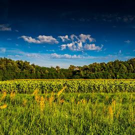 Fields and forests by Štefan Brajković - Landscapes Prairies, Meadows & Fields ( forests, koprivnica-križevci county, sveta ana, croatia, fields )