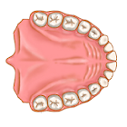 Dentist Pro Premium icon