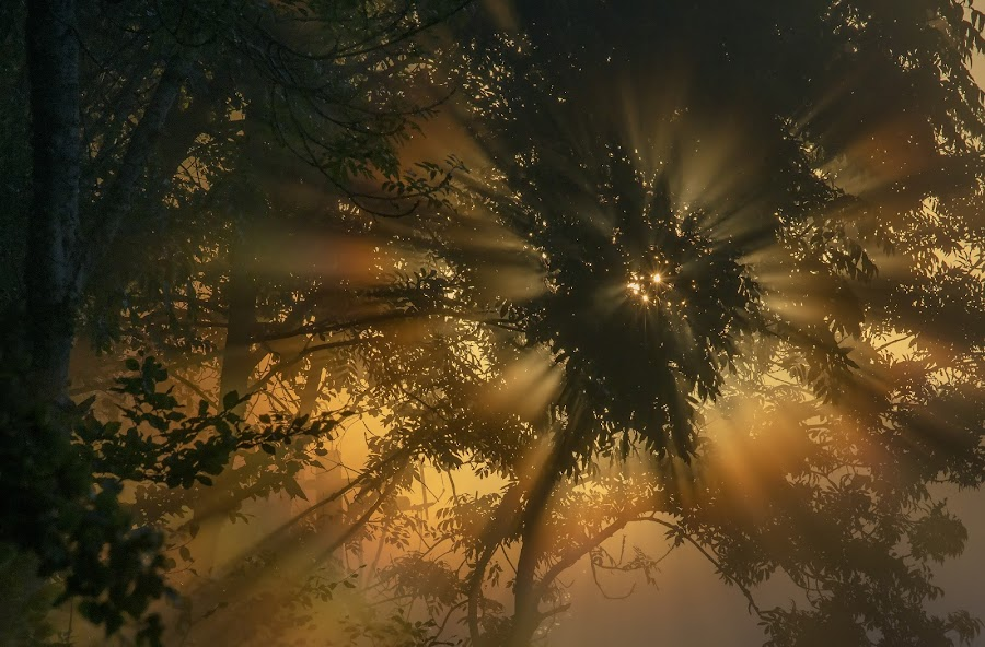 UT I LJUS by Patrik Falk - Landscapes Forests ( #GARYFONGDRAMATICLIGHT, #WTFBOBDAVIS )