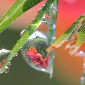 I just discovered why the world is round by Lala Fuad - Nature Up Close Natural Waterdrops