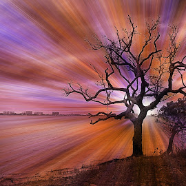 Shine by Barton Bishop - Digital Art Places ( point, tree, perdido, textured, lone, shine, landscape, creativity, lighting, art, artistic, purple, mood factory, lights, color, fun )