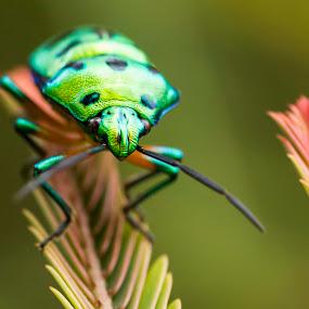 I am a cute green bug! by Sadatul Islam - Animals Insects & Spiders (  )