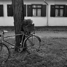 Bicycle&Windows by Zvezdana Kujovic - Transportation Bicycles ( salas, bicycles, b&w, window )