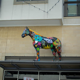 Horse on the Roof by Greg Moore - Buildings & Architecture Other Exteriors ( roof, colorful, horse, i want one, downtown )