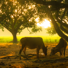 early autumn lights by Portable Noman - Animals Other Mammals ( heavenly, autumn, pets, sunrise, garden, rural )