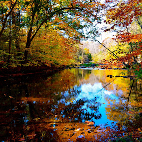 Painter's Delight by Carl Testo - Landscapes Forests ( water, eli, autumn, forest, color, colors, landscape, portrait, object, filter forge )