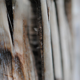 Shoot by Barbara Langfeld - Abstract Macro ( abstract, bamboo, macro, greenhouse, brown )