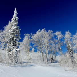 by Dennis Robertson - Landscapes Forests (  )
