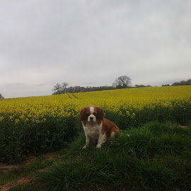 Cute Ashley with flowers by Kayleigh Pyle - Novices Only Pets ( field, hill, puppy, flowers, dog, cute )