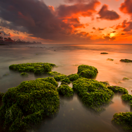 The X Moss by Choky Ochtavian Watulingas - Landscapes Waterscapes ( clouds, water, mold, tree, waterscape, moss, beach, seascape, sunrise, csv, sun )