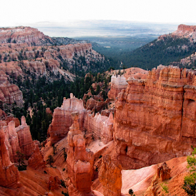 Bryce Canyon, UT HooDoos by Vonelle Swanson - Landscapes Mountains & Hills ( national park, utah, trees, hoodoos, landscape, rocks, bryce canyon )