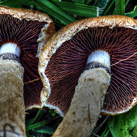 by Karen McKenzie McAdoo - Nature Up Close Mushrooms & Fungi